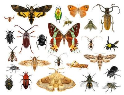 BREAKING NEWS: Software Bugs Declared an Endangered Species Image